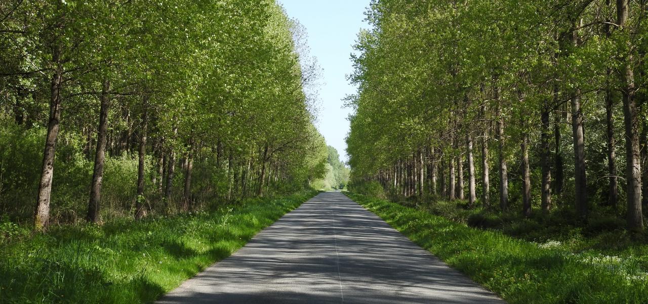 Route de Berck, Tortefontaine